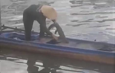 Chi Cục kiểm lâm TPHCM khẳng định không mang cá sấu nhí trên kênh Tẻ về nuôi