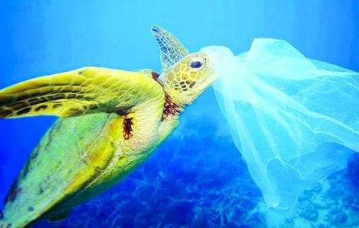 Nhặt sỏi ở biển cũng là… tội ác