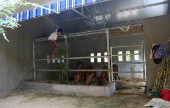 Nghệ An xây cho dân nghèo chuồng bò giá 236 triệu đồng, có gì đặc biệt?