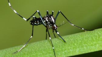 """Chikungunya - """"bệnh lạ"""" mà không lạ"""
