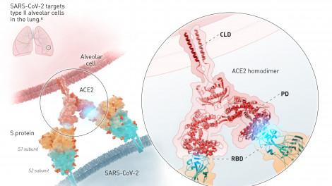 SARS-CoV-2 tự biến đổi vật chất di truyền để đánh lừa miễn dịch tế bào