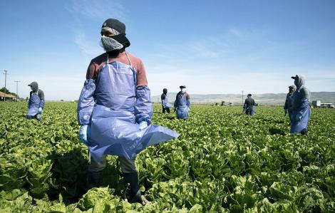 Lao động nhập cư tại Mỹ đi không được, ở không yên