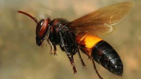 Nam bệnh nhân rơi vào hôn mê khi bị ong đốt 5 - 6 mũi