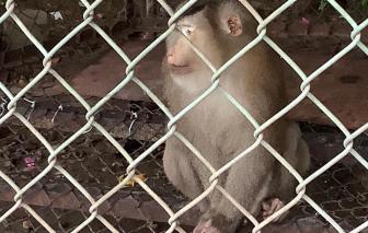 Bị khỉ nhà nuôi tấn công, người đàn ông suýt phải cắt bỏ bàn tay