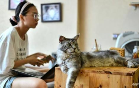 Quán cà phê cưu mang mèo của bạn trẻ Việt lên báo nước ngoài