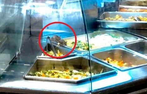Chuột vô tư ăn đồ ăn đang bày bán tại Aeon Mall