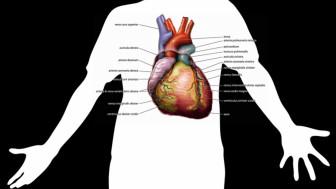 Stress và tức giận ảnh hưởng đến nguy cơ suy tim