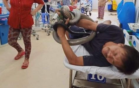 Bị rắn cắn, ôm luôn rắn vào bệnh viện cấp cứu