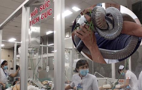 Người đàn ông mang rắn đến bệnh viện cấp cứu đã được truyền 10 lọ huyết thanh, đã qua cơn nguy kịch