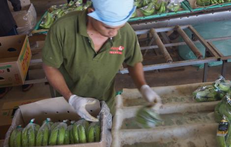 Lũ lụt tại Trung Quốc khiến rau quả xuất khẩu Việt Nam gặp khó