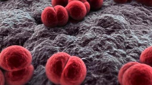Dễ dính vi khuẩn não mô cầu khi quan hệ đồng giới