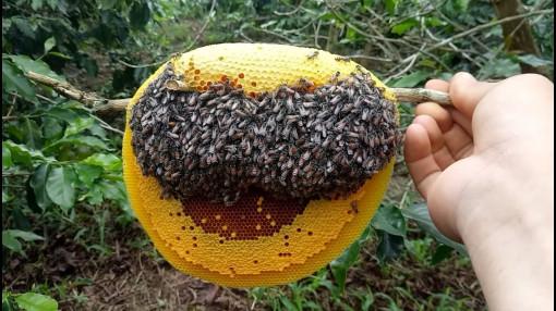 Mật ong giúp chữa cảm lạnh tốt hơn cả thuốc