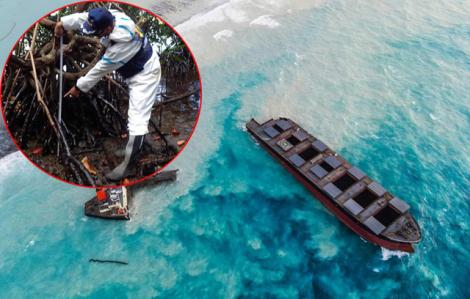 Hàng ngàn tấn dầu tràn có thể gây chết rừng ngập mặn