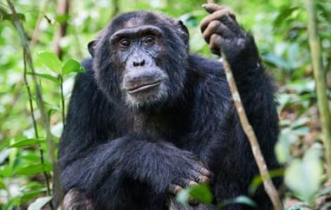Nạn tàn phá rừng là nguyên nhân của đại dịch COVID-19?