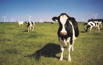 Các biện pháp bảo vệ môi trường của ngành bơ sữa Mỹ