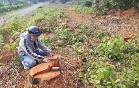 Phá rừng, doanh nghiệp bị xử phạt hơn 300 triệu đồng