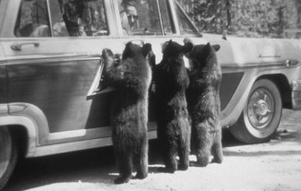 Những công viên vào thập niên 1950 trông thú vị ra sao?