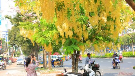Những mùa hoa rực rỡ ở Sài Gòn