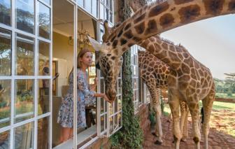 Những khách sạn và nhà nghỉ kỳ lạ nhất thế giới
