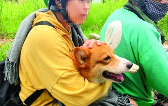 Gắn chíp định vị để bảo vệ cún cưng