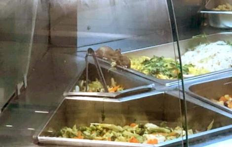 Chuột, gián, ruồi tung tăng trong nhiều cơ sở kinh doanh thực phẩm