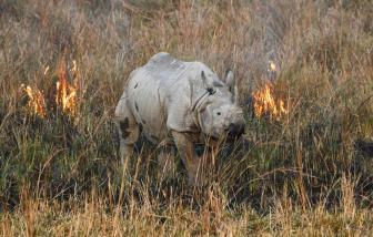 Số lượng động vật hoang dã trên thế giới giảm gần 70% trong vòng chưa đầy 50 năm