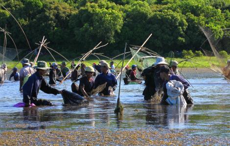 """Độc đáo Lễ hội """"Phá trằm"""" lội bùn bắt cá ở Quảng Trị"""