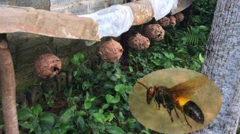 Lọc máu 5 lần cứu bệnh nhân bị ong đốt hơn 40 nốt