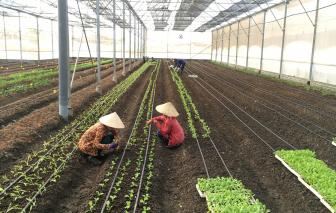TPHCM: 117 Hợp tác xã nông nghiệp than có đất nhưng không xây được nhà xưởng