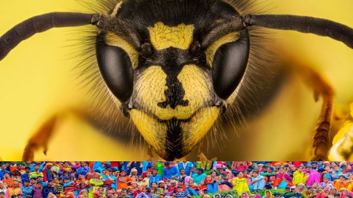 Ong thích chích người mặc đồ sặc sỡ, xịt nước hoa