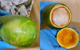 Singapore: Giấu ma túy trong trái đu đủ, 8 người bị bắt