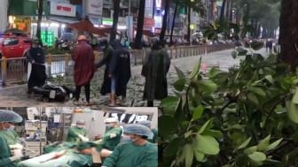 Nạn nhân bị cây ngã đè ở TPHCM đã tử vong