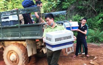 Thả 83 cá thể động vật được cứu hộ tại Củ Chi về với tự nhiên