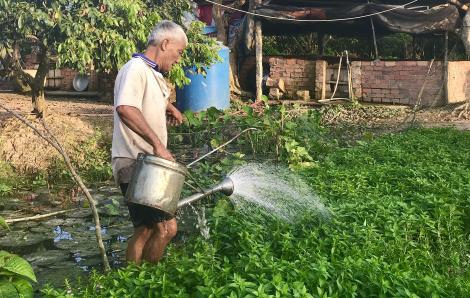 Người già trong căn nhà vắng: Bận rộn để không cô đơn