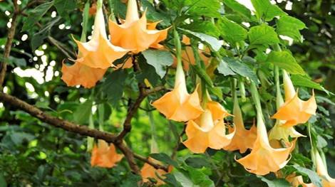 Xào hoa chuông ăn, một phụ nữ không nhận ra người thân