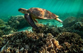 Rạn san hô lớn nhất thế giới giờ chỉ còn một nửa