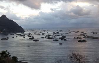 """""""Hạm đội"""" tàu cá Trung Quốc bị cáo buộc làm suy giảm nguồn dự trữ thủy sản của thế giới"""