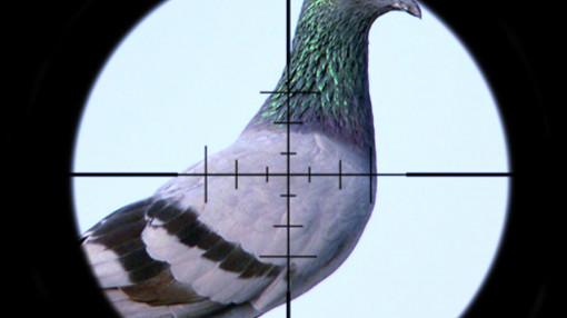 Bị đạn xuyên từ cổ lên tai do cướp cò súng bắn chim