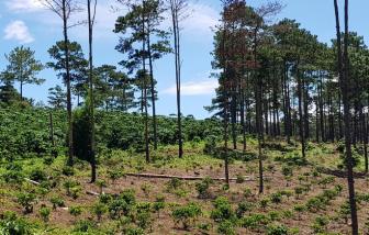 Lâm Đồng phát hiện một doanh nghiệp chuyển đổi trái phép hàng chục hecta đất rừng