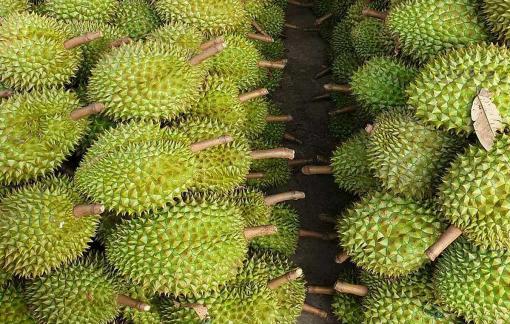 Xuất khẩu trái cây sang Trung Quốc ngày càng khó hơn