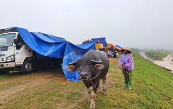 Người dân ngoài đê sông Lam hối hả chạy lũ