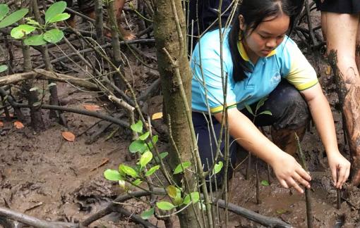 Con đi trồng rừng