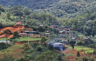 Lâm Đồng: Chưa có quy định xử lý người đứng đầu để xảy ra lấn chiếm rừng trái phép