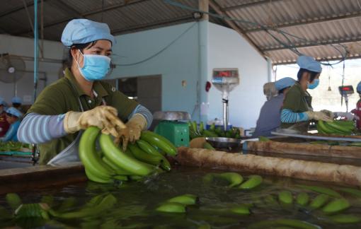 8 mặt hàng nông sản đạt kim ngạch xuất khẩu trên 1 tỷ USD