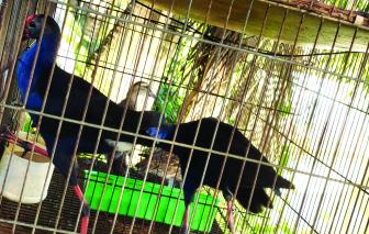 Kỳ 1: Bẫy lưới, câu trời bủa vây Vườn Quốc gia Tràm Chim