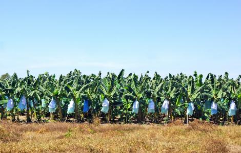 Doanh nghiệp nước ngoài ngại đầu tư vào nông nghiệp Việt, vì sao?