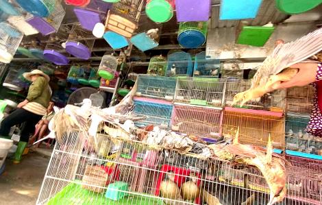 Kỳ cuối: Vướng luật, khó xử lý người bẫy chim trời?
