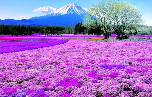 Thiên đường hoa hồi sinh từ miền đất chết