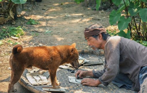 """Tranh cãi không ngừng khi chọn chó Nhật lên phim """"Cậu Vàng''"""