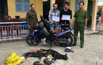 Miền Tây: Cuối năm, trộm chó, mèo hoành hành